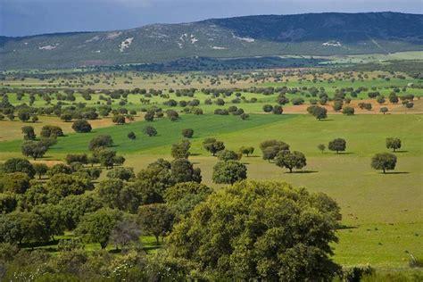 Parque Nacional de Cabañeros   Castilla la Mancha   España