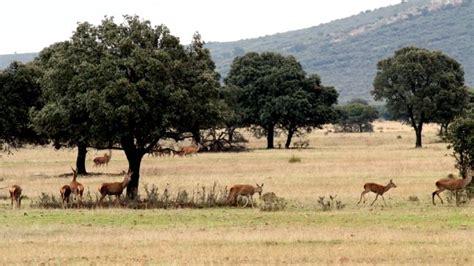 Parque Nacional de Cabañeros en la provincia de Ciudad ...
