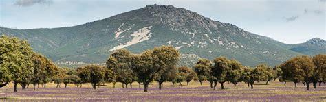 Parque Nacional de Cabañeros | Guía Repsol
