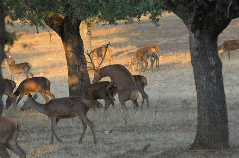 Parque Nacional de Cabañeros | Parques, Parques nacionales ...