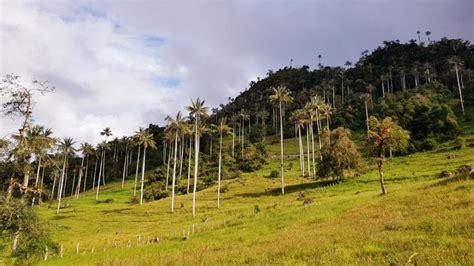 Parque Nacional de Cutervo en peligro de extinción por ...
