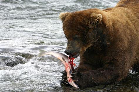 Parque Nacional de Katmai  Alaska  en Anchorage: 1 ...