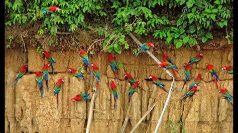 Parque Nacional del Manu   PERÚ  2014  ᴴᴰ   YouTube