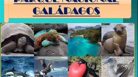 Parque Nacional Galápagos   YouTube
