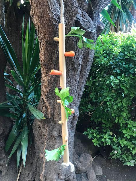 Parque zoológico de Barcelona. Enriquecimiento en guacamayos