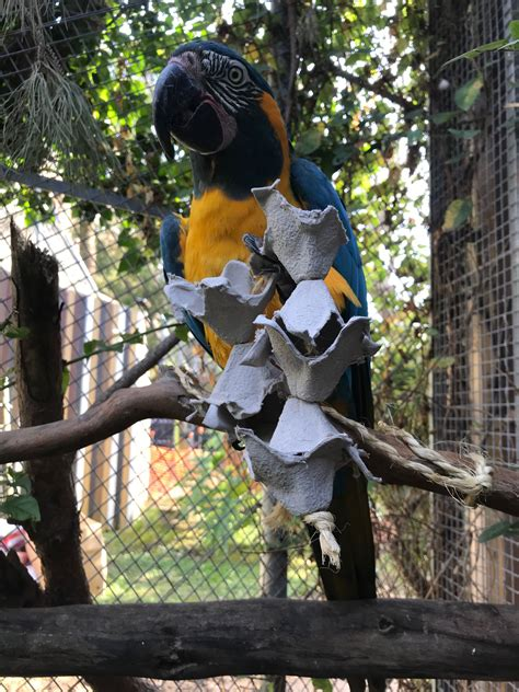 Parque zoológico de Barcelona. Enriquecimiento en ...