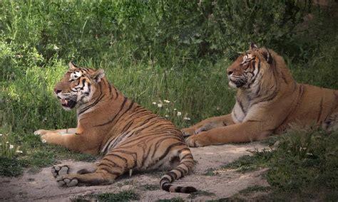 Parques de animales para grandes y pequeños en España   El ...