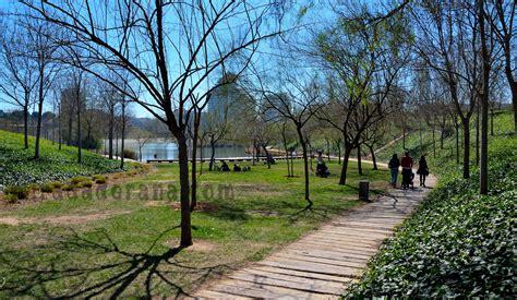 Parques de Valencia   Mirada de rana
