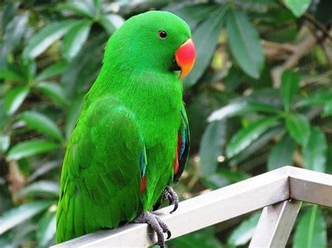 Parrot Bird Beautiful Cute · Free photo on Pixabay