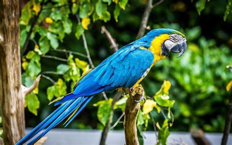 parrot, Birds, Animals Wallpapers HD / Desktop and Mobile ...