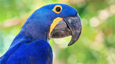 Parrots Among Most Threatened Bird Groups | Audubon