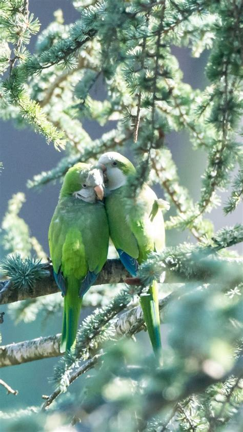 parrots, couple, branches, tender | Aves pajaros, Aves ...