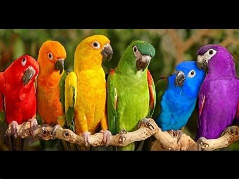 Parrots Majestic Birds Nature Documentary HD   YouTube
