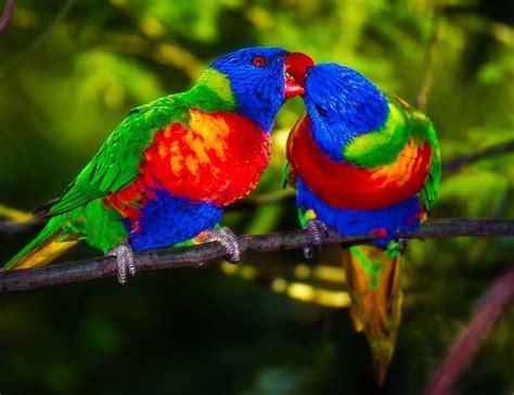 Parrots Pair Bird · Free photo on Pixabay