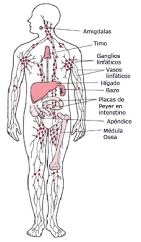 Partes del cuerpo humano: enero 2011