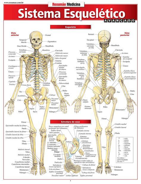 Partes del cuerpo y sus funciones | Que funcion cumple