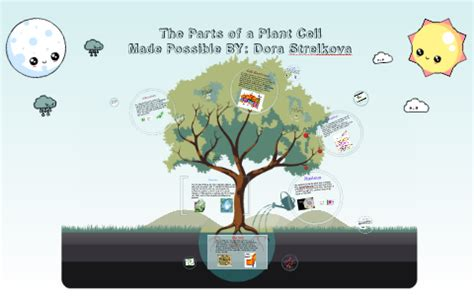 Parts Of a Plant Cell by Dora Strelkov on Prezi