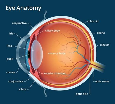 Parts of the eye diagram