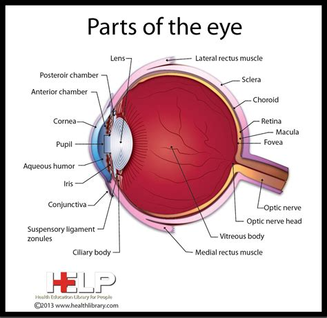 Parts of the Eye.....Only God could have made such a ...
