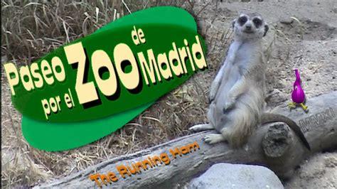 Paseo por el Zoo de Madrid   YouTube