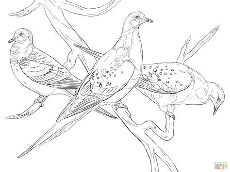 Passenger Pigeons coloring page | Free Printable Coloring ...