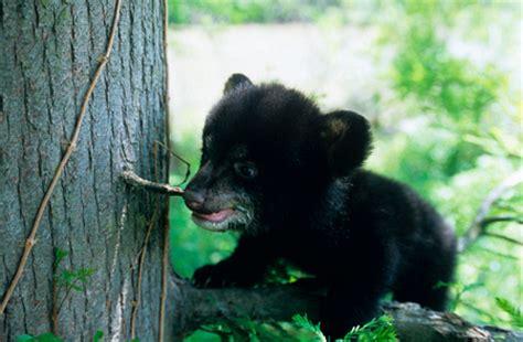 Passport to Texas » Blog Archive » Conservation/Wildlife ...