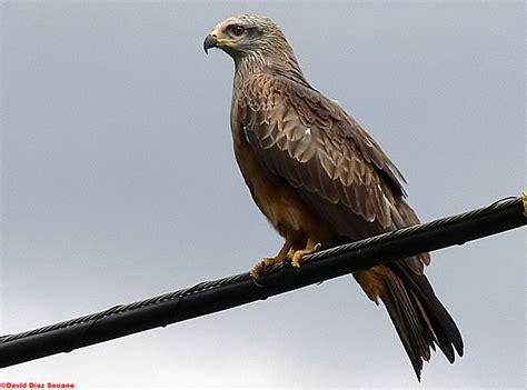 Patrimonio Serrania: Las aves rapaces de la serrania de Ronda