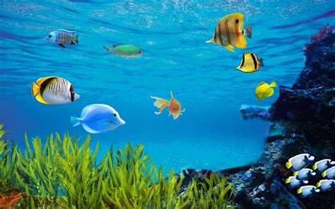 Peces Acuario Live Wallpaper for Android   APK Download