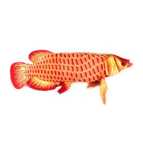 Peces acuario, venta de peces tropicales, peces online ...