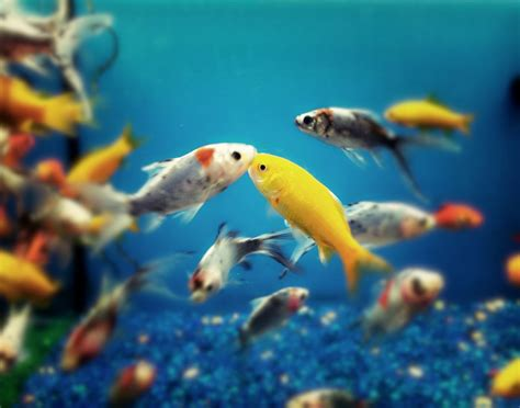 Peces de agua salada 1 | PETS | Peces de agua salada ...