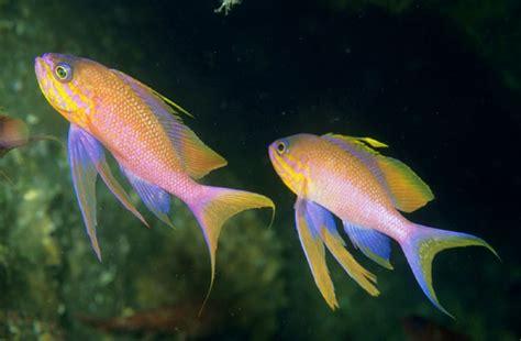 Peces del mar mediterraneo/Peces/46