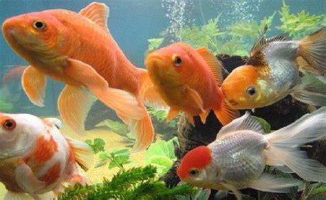 Peces en el acuario, porque comprar los que socializan ...