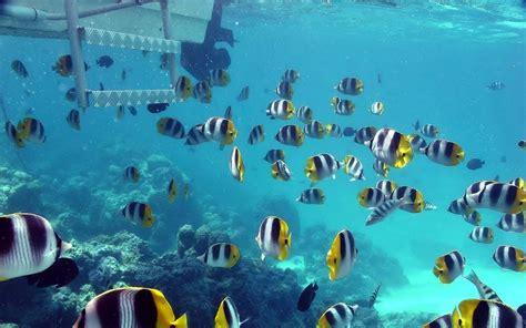 Peces en el fondo del mar   1280x800 :: Fondos de pantalla ...