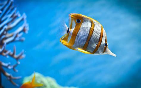 Peces hermosos de acuarios hd 2560x1600   imagenes ...