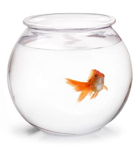 Peces para acuarios pequeños