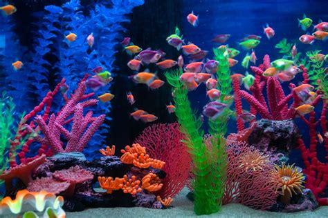 Peces tropicales para tu acuario