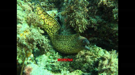 Peces y demás especies del Mar Mediterraneo   YouTube