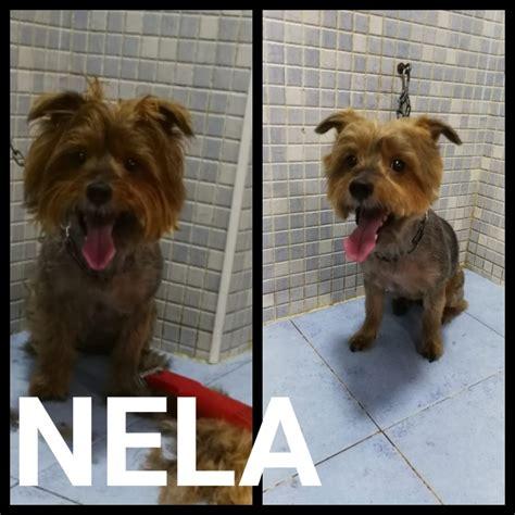 PELUQUERIA | VITEVITEDOG Valencia. Mascotas. Peluqueria canina