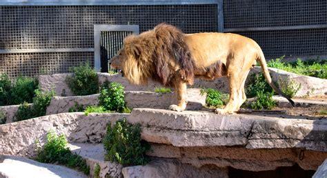 PENSAMIENTOS JFS: Un día en el Zoo de Barcelona