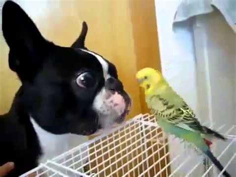 Perro gracioso quiere hacerse amigo del pájaro   Perros ...