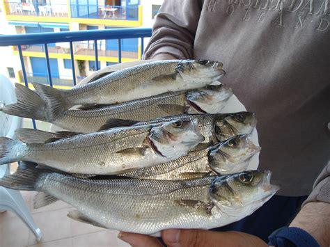 Pesca en La Manga del Mar Menor: HISTORIAL DE CAPTURAS