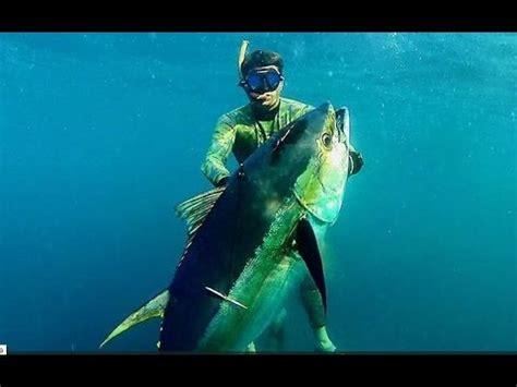 Pesca in apnea Tonno 85 kg a Panama   Pesca submarina atún ...