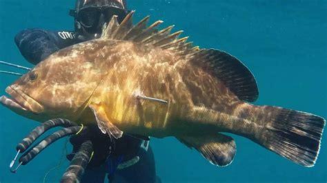 Pesca Submarina MERO 9 Kg a   39 M PROFUNDIDAD   ALICANTE ...