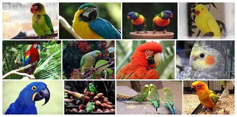 Pet Bird Types | Safari Veterinary Care Centers in League ...