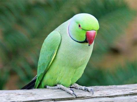 Pet Birds that Talk You Can take care of at Home | Pet ...