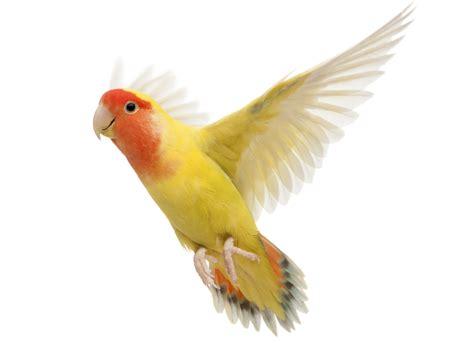 Pet Birds   We Need Fun