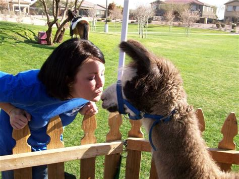 Petting Zoo Animals for Kid Party | Birthday Petting ...