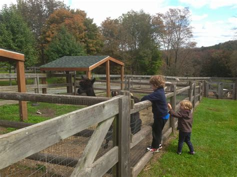 Petting Zoo at Upper Rooms Farm