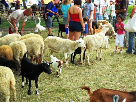 Petting Zoo Chicago Party Rentals | Pony rides, Character ...