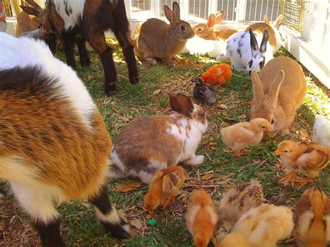 Petting Zoo   Happy Party Event Rentals